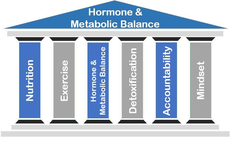 Hormones Metabolic Balance
