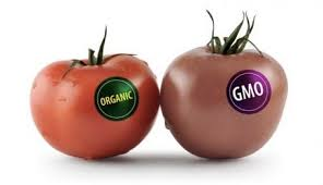 The Facts about GMOs and Organic